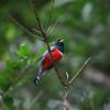 Trinidad & Tobago – a Birder's Paradise