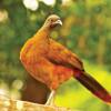 Tobago's Natural History