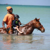 Healing & Being with Horses in Tobago