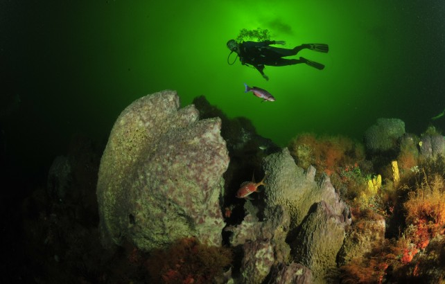 A diver enjoys the scenery during a dive at the Underwater Carnival. Photographer: Courtesy the THA