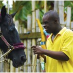 Healing with horses 4
