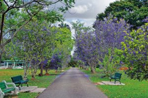 Trinidad's Botanical Gardens. Photo: Ayanna Young
