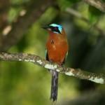 Tobago is a boon for bird watchers and birders. Photographer: Stephen Broadbridge