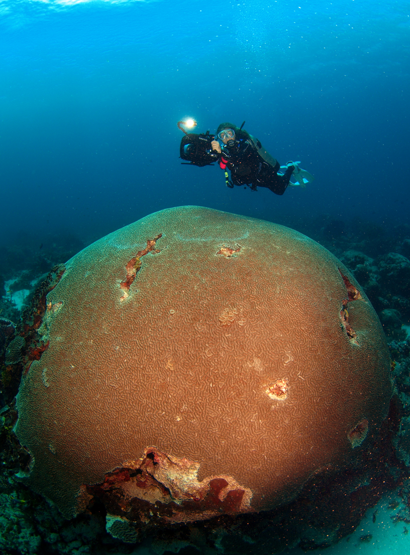 A diver hovers above what is often referred to as the largest brain coral in the world, off Speyside. Photographer: Sport Diver Magazine, via the THA