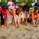 Visitors help critiTurtle release Tobago. Photographer: Giancarlo Lalsingh/SOS Tobago