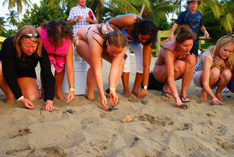 Visitors help critiTurtle release Tobago. Photographer: Giancarlo Lalsingh/SOS Tobago