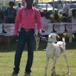 A contestant in the Buccoo Goat Racing Festival. Photographer: Richard Rawlins