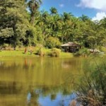 The pond at La Vega Estate near Gran Couva. Photographer: Wheel Barrow Imaging