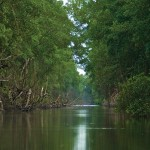 The River Caroni at the Caroni Swamp. Photographer: Maria Huggins