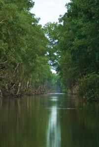 The River Caroni at the Caroni Swamp. Photographer: Maria Huggins