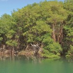 Bon Accord Lagoon & Mangrove Swamp on the Leeward Coast. Photographer: Oswin Browne