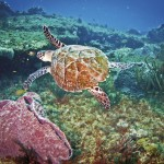 Diving in Tobago. Photo: Edward Montserin