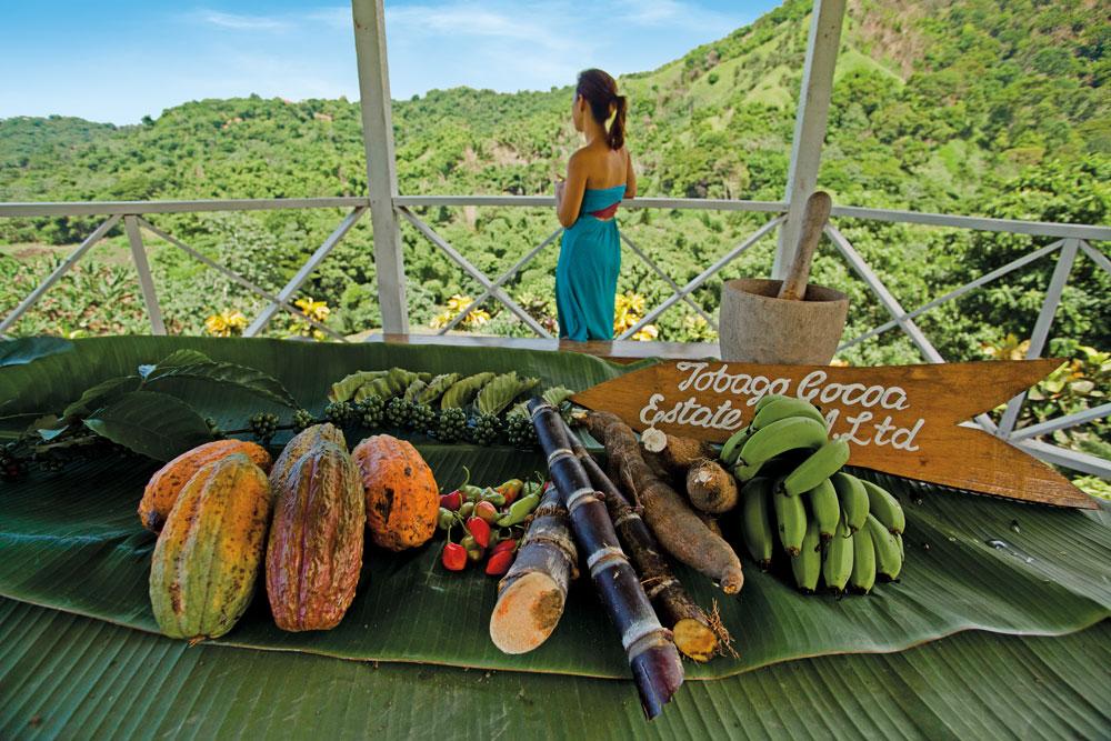 Tobago Cocoa Estate. Photo: Alex-Smailes