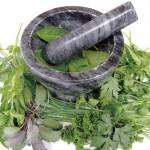 Trinidad & Tobago herbs