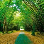 Bamboo Cathedral Trinidad. Photograph by Robert Ramkissoon