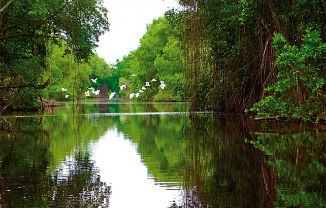 Caroni Bird Sanctuary. Photograph by Robert Ramkissoon