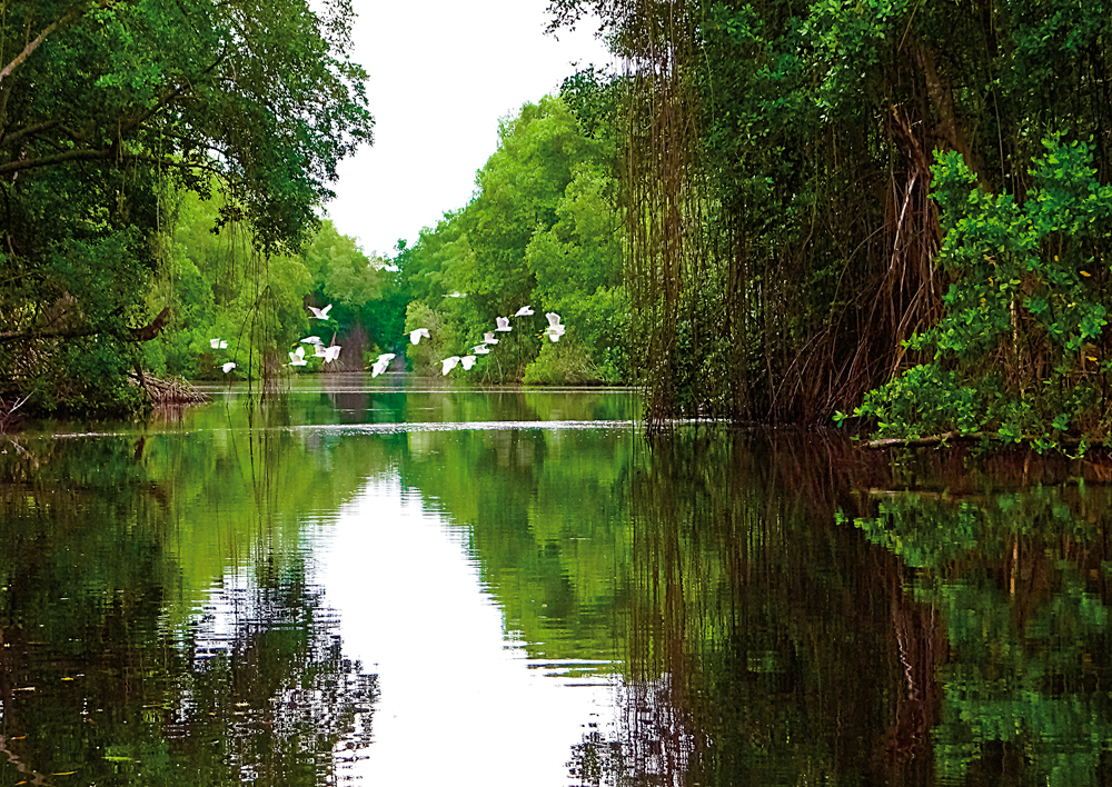 Caroni Bird Sanctuary. Photograph by Robert Ramkissoon