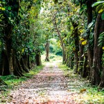 Walking Path. Photograph courtesy of Tobago cocoa Estates.