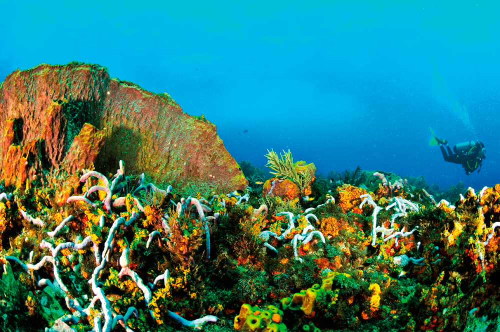 Divers adore the reefs off Tobago. Courtesy The Division of Tourism and Transportation.