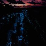 Bioluminscence. Photograph by Arttomcat/Shutterstock.com