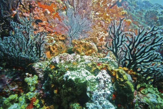Coral Tobago. Photo by Stephen Broadbridge
