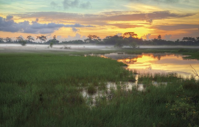 Caroni Swamp. Photo by Chris Anderson