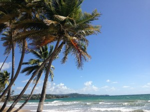 Courtesy the Tobago Sea to Sea Marathon