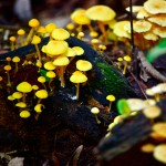 Closeup of mushrooms growing in the forest. Photo by Stephen Broadbridge