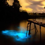 "At least once a decade, conditions at the Ortoire River in Mayaro become perfect for a bioluminescence show. Where salt and fresh water mix, a chemical reaction from a kind of plankton causes the river to light up with ""cold"" blue light. The last major sightings took place over several weeks in 2014. Photo by Nyla Singh"