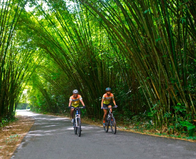With no cars allowed, the bamboo cathedral is popular with cyclists, walkers, joggers and hikers. Photo by Stephen Broadbridge