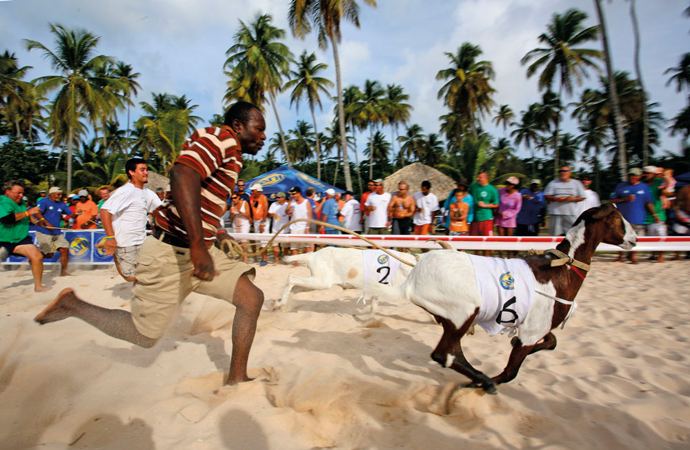 Goat racing is popular at Great Fete as well as during the Easter long weekend. Photo by Stephen Broadbridge