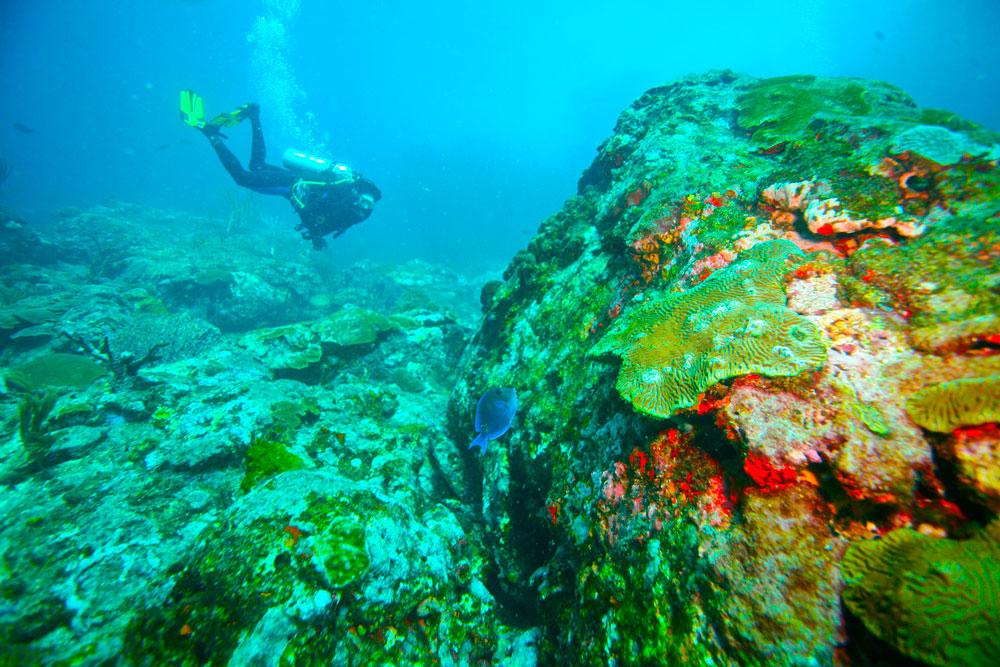 Diving in Speyside. Photo by Stephen Broadbridge