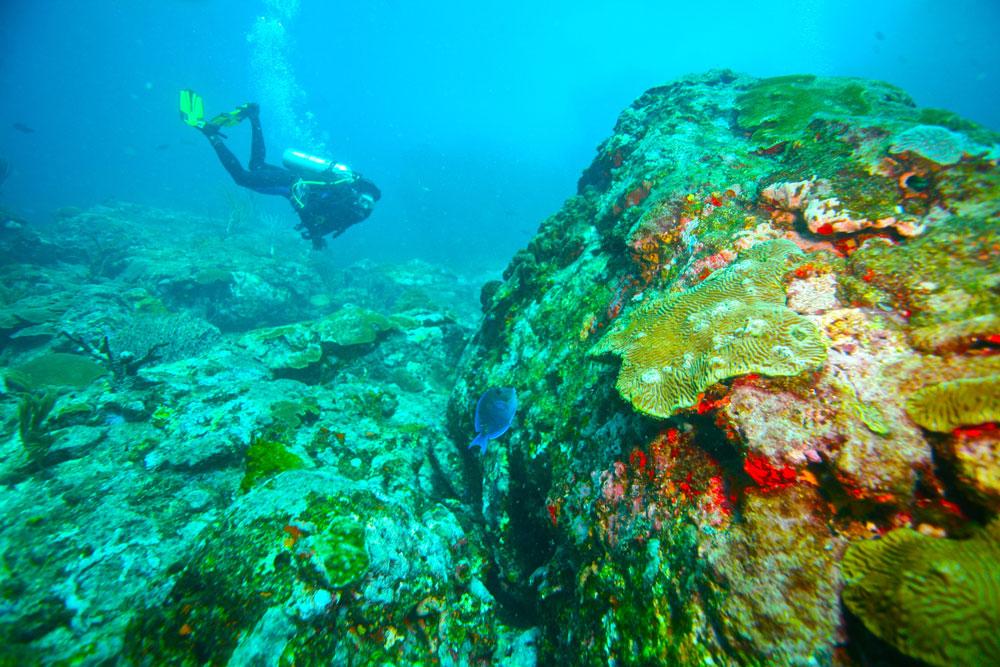 Diving in Tobago. Photo by Stephen Broadbridge