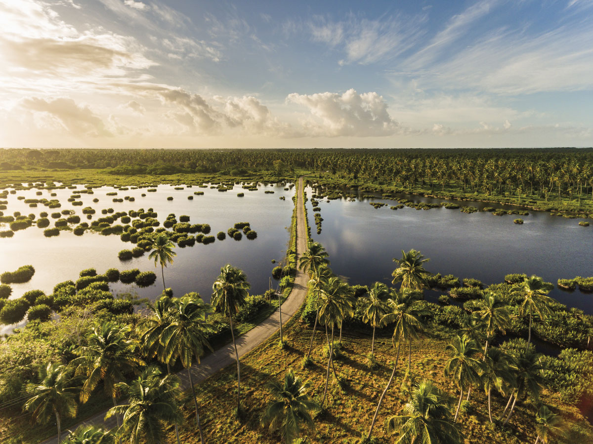The great Icacos lagoon is bisected by a narrow road leading to the CGA Ltd's coconut estate and further to the town of Icacos. Photo by CGA Ltd (the Coconut Growers Association)