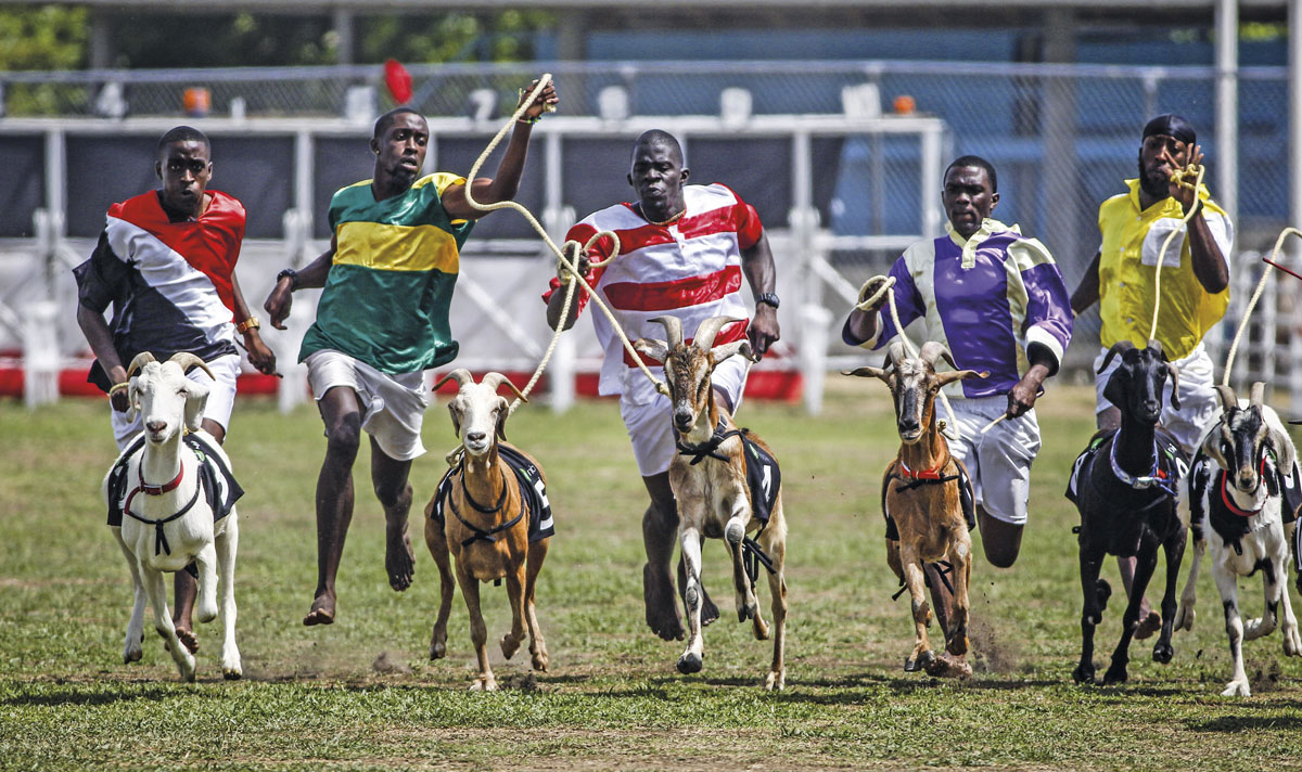 Goat races are a feature at the Easter Family Day event at Buccoo. Photo by Piotr Andrews