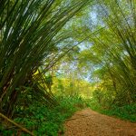 The Bamboo Cathedral in Chaguaramas. Photo by Chris Anderson