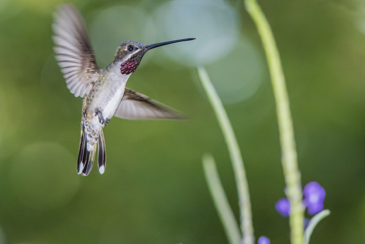 Saving Trinidad's Asa Wright Nature Centre