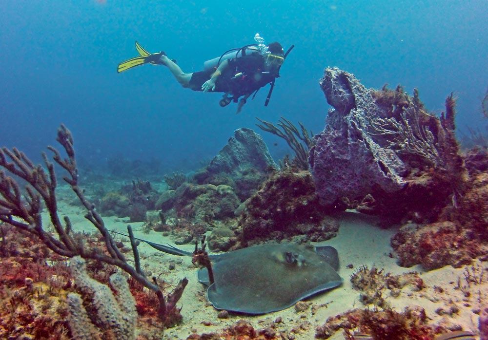 Photo courtesy Undersea Tobago